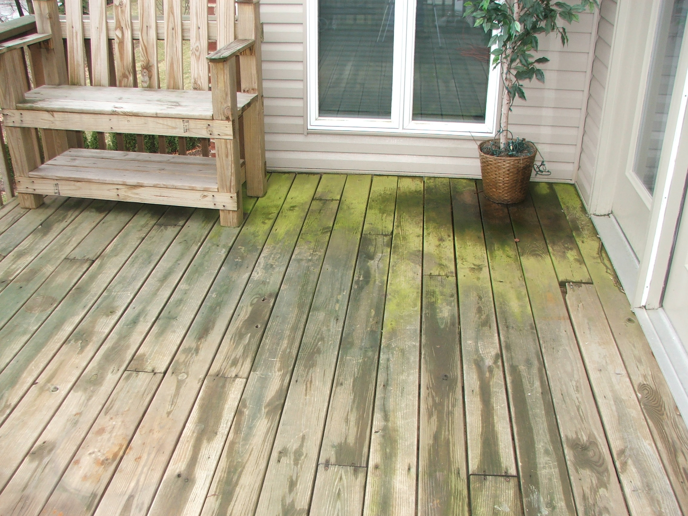 Weather, dirty, green-algae covered wood deck.