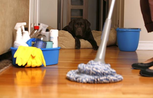 house cleaning pic mopping the floor